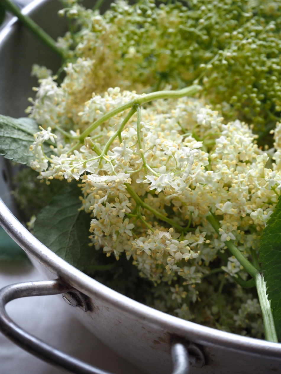 a basin of elderflower blossoms